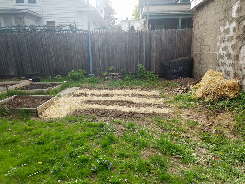Mulch straw for garden