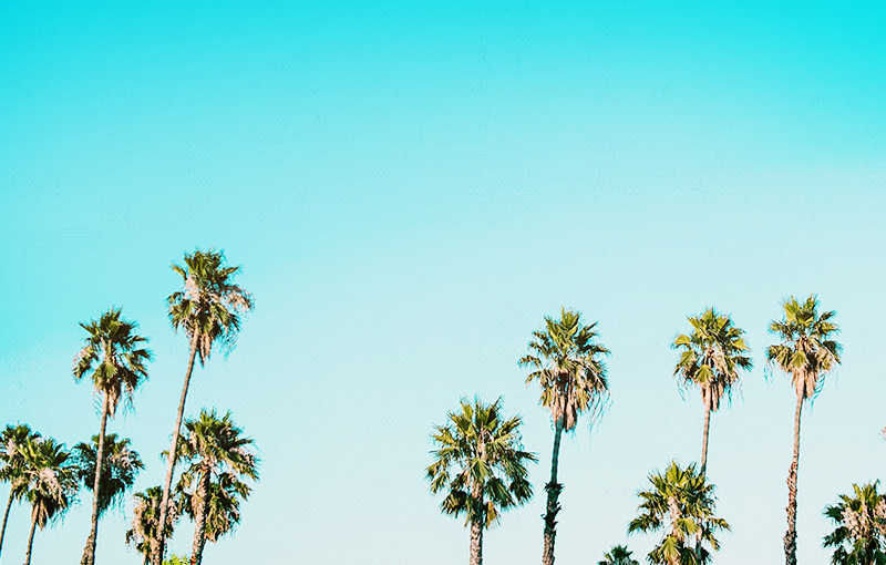 Palm Trees - yoga vacation travel tips